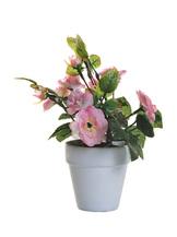 Роза розовая в горшочке (8J-11CK0190)