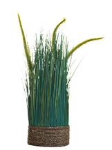 Сухоцвет вейник зеленый на плетенной основе(8J-12RK0031)