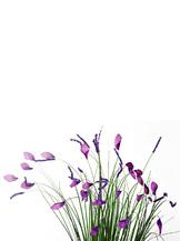 Стебли травы с цветами (8J-12RB0001)