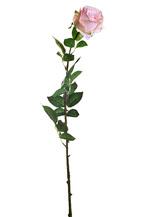 Роза нежно-розовая (8J-1211S0017)