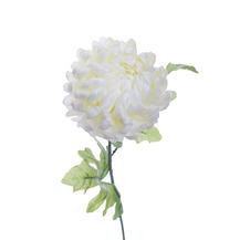 Хризантема белая (8J-13GS0001)