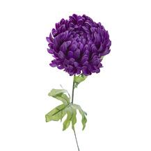 Хризантема фиолетовая (8J-13GS0002)