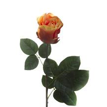 Роза оранжево-пурпрная (7A14B00011)