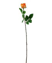 Роза оранжево-жёлтая (7A14B00012)
