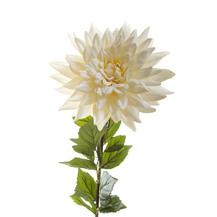 Хризантема кремовая (7A85N00004)