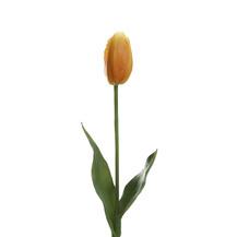 Тюльпан оранжевый (7A10C00002)