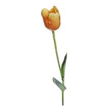 Тюльпан жёлтый (7A10C00003)