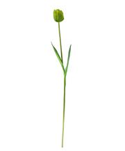 Тюльпан зелёный (7A10D00005)