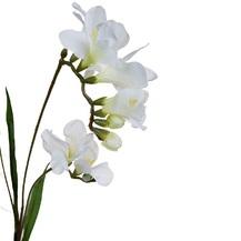 Фрезия белая (9F27693P-1538)
