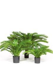 Саговая пальма (FA17997)